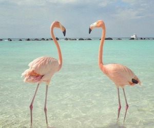 flamingo and ocean image