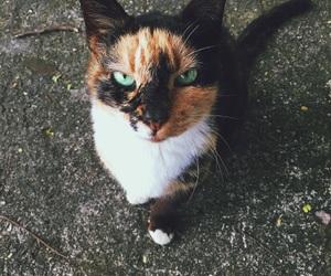 beautiful, cat, and fierce image