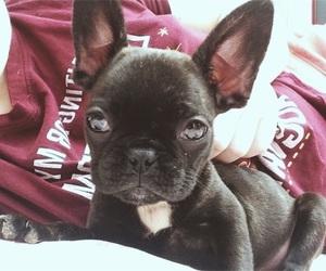 baby, big eyes, and dog image