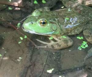 aesthetic, frog, and nature image