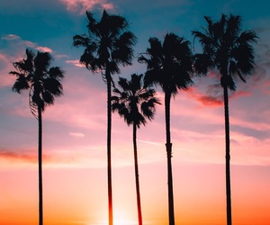 sunset, beautiful, and palm trees image