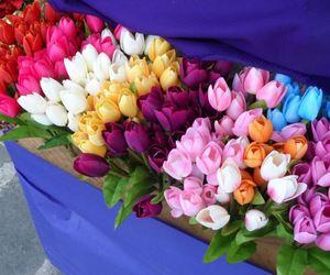 tulips, beautiful, and beauty image