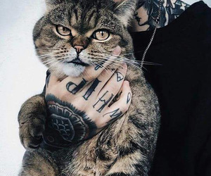 cat, tattoo, and alternative image