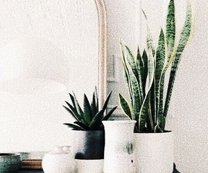 plants, green, and white image