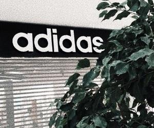 adidas, green, and plants image