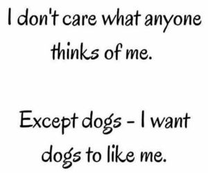 i dont care and dogs image