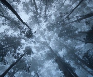cool, glory, and forest image