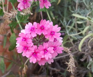 flor, nature, and pink image