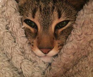 animals, pretty, and cute image