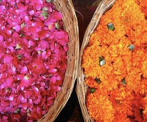 flowers, india, and rose image