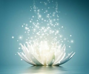 lotus and flowers image