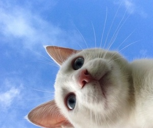 cat, sky, and blue image