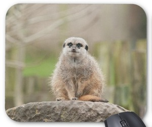 wildlife photography, personalised gifts, and meerkats image