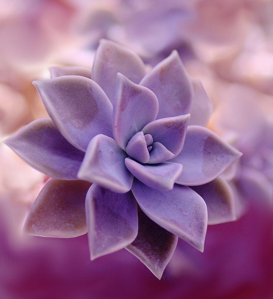 bokeh, closeup, and colorfull image
