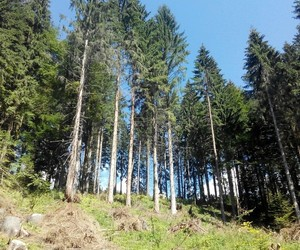 forest, les, and slovakia image
