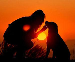 dog, sunset, and sun image