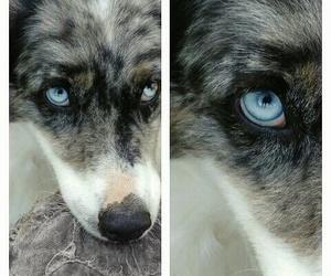 beautiful, eyes, and blue image
