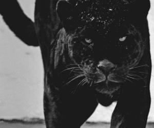 black, cat, and animal image