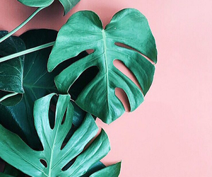 inspo, nature, and pink image