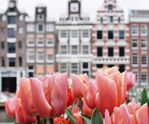 flowers, city, and netherlands image