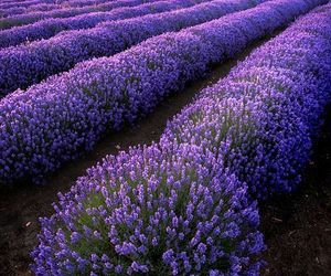 beautiful, flowers, and place image