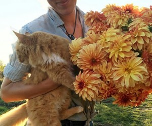 beautiful, cats, and flowers image