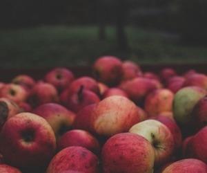 apple, food, and autumn image