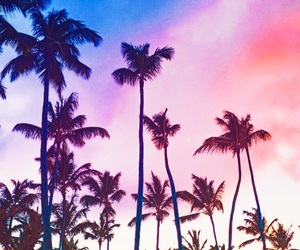 evening, nature, and tropical image