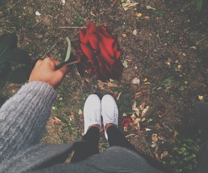 rose, flowers, and tumblr image