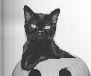 black, meow, and calabaza image