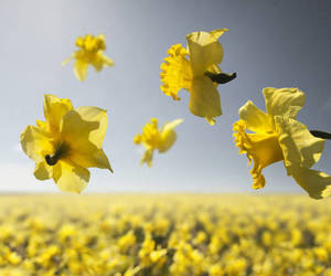 flowers, photography, and yellow image