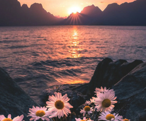 beautiful, flor, and flowers image