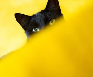 cat and yellow image