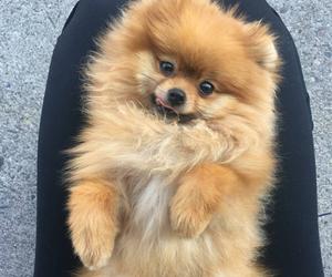 dog, pompom, and sweet image