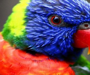 closeup, colorfull, and photography image