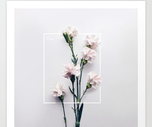 carnations, flowers, and minimal image