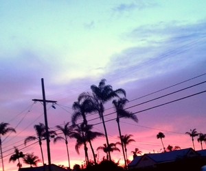 aesthetic, alternative, and palm trees image