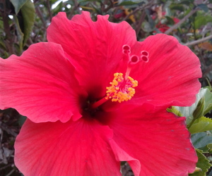 flower, pretty, and red image