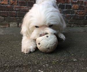 animal, ball, and little image