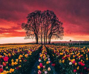 flowers, garden, and tulip image