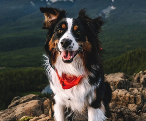 dog, animal, and mountains image
