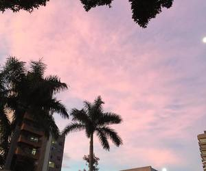 palm and pink image