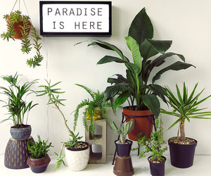 plants, decoration, and paradise image