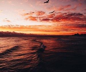 sunset, sea, and bird image