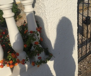 flowers and shadow image