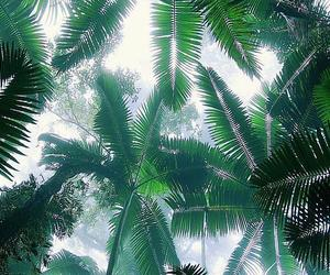 summer and tropical image