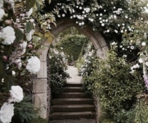 garden, flowers, and nature image