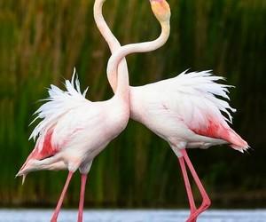 love, flamingo, and animal image