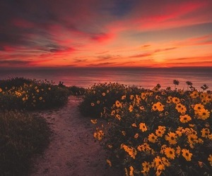 flowers, sunset, and beach image