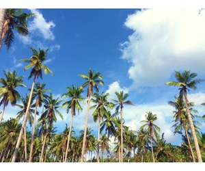 blue, clouds, and coconut image